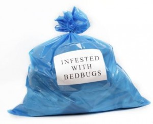 bagged bed bugs web