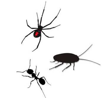 GENERAL PEST TREATMENTS
